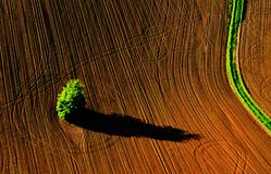 Agro pole w Artystycznym raju Obraz Stock