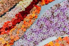 Agro powystawowa Złota jesień, rosjanin Fotografia Royalty Free