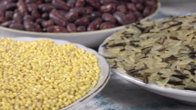 Agro Products. The camera moves past the small plates filling various kinds of grasses and legumes stock video