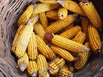 Agro-traitement de l'industrie Photographie stock