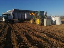 Agro traktorpäfyllningspotatisar i en skörd Arkivfoto