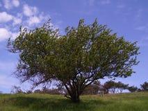 agrochemical royaltyfri foto