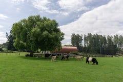 Agrodome gospodarstwa rolnego wycieczka turysyczna Fotografia Royalty Free