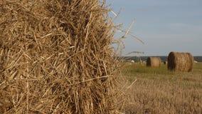 Agronomía y concepto de la cosecha almacen de video