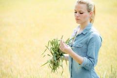Agronom egzamininuje jęczmiennych uprawa ucho, kobieta robotnika rolnego kontrola Zdjęcia Royalty Free