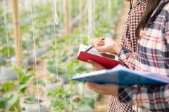 Agronom egzamininuje narastaj?ce melonowe rozsady na gospodarstwie rolnym, obrazy stock