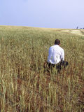 Agronom egzamininuje rośliny Fotografia Stock
