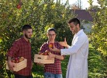 Agronom i rolnicy w jabłczanym sadzie Obraz Royalty Free