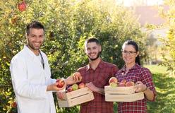 Agronom i rolnicy w jabłczanym sadzie Zdjęcia Stock