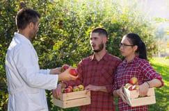 Agronom i rolnicy w jabłczanym sadzie Obrazy Stock