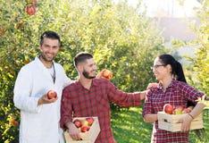 Agronom i rolnicy w jabłczanym sadzie Obraz Stock