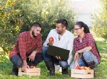 Agronom i rolnicy w jabłczanym sadzie Zdjęcie Stock