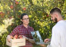 Agronom i rolnik w jabłczanym sadzie Obraz Stock