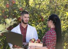 Agronom i rolnik w jabłczanym sadzie Obraz Royalty Free