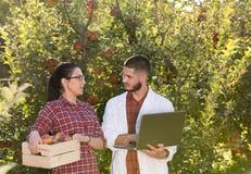 Agronom i rolnik w jabłczanym sadzie Obrazy Royalty Free