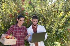 Agronom i rolnik w jabłczanym sadzie Fotografia Royalty Free