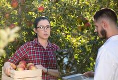 Agronom i rolnik w jabłczanym sadzie Zdjęcia Stock