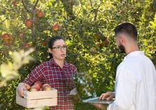 Agronom i rolnik w jabłczanym sadzie Zdjęcie Stock