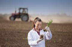 Agronom kobieta sprawdza pszenicznego przyrosta w polu Obrazy Royalty Free
