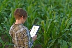 Agronom mit Tablet-Computer auf dem Maisgebiet stockbild