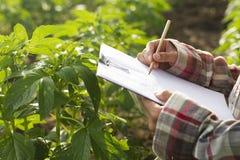 Agronom sprawdza rośliny Obrazy Stock