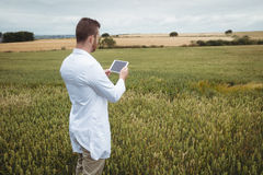 Agronom używa cyfrową pastylkę w polu Zdjęcie Royalty Free