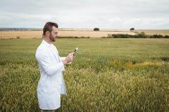 Agronom używa cyfrową pastylkę w polu Fotografia Royalty Free
