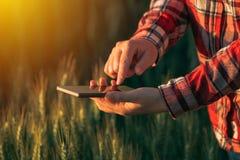 Agronom używa mądrze telefon wiszącą ozdobę app analizować uprawy developm Obrazy Royalty Free
