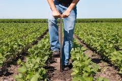 Agronom Using en minnestavla i ett jordbruks- fält arkivfoto