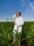 Agronom w kukurydzanym polu Obraz Stock