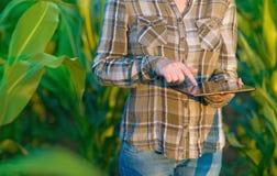 Agronom z pastylka komputerem w kukurydzanym polu Zdjęcie Royalty Free