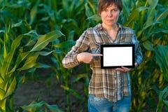 Agronom z pastylka komputerem w kukurydzanym polu Fotografia Stock