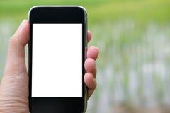 agronoma rolnik używa mądrze telefon monitorować wilgotność, pH, tem obrazy stock