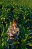 Agronome avec la tablette dans le domaine de maïs Photo libre de droits