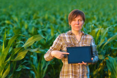 Agronome avec la tablette dans le domaine de maïs Image libre de droits