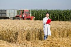 Agronome de femme dans le domaine de blé image stock