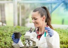 Agronome de femme faisant l'expérience sur la jeune plante en serre chaude photo stock