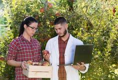 Agronome et agriculteur dans le champ de pommiers photos libres de droits