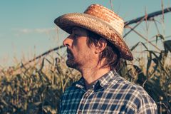 Agronome sûr sérieux prévoyant l'activité agricole dans le domaine de maïs image stock