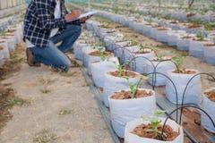 Agronomen undersöker de växande melonplantorna på lantgården, bönderna och forskarna i analysen av växten royaltyfri fotografi