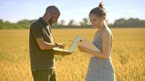 Agronomi che lavorano nel giacimento di grano Scienziato di agricoltura che per mezzo del computer video d archivio