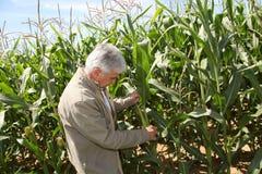 agronomia Zdjęcie Royalty Free