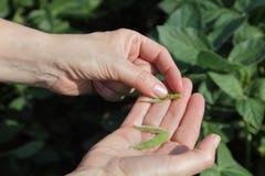 agronomia Fotografia Royalty Free