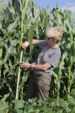 agronomia Obrazy Royalty Free