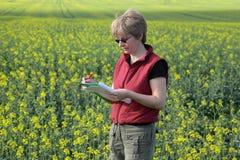 Agronomia, oilseed Zdjęcia Royalty Free