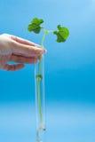 agronomii target2164_0_ Zdjęcie Royalty Free