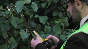 Agronomist делает исследование измеренияй работая зеленый цвет органической продукции сток-видео