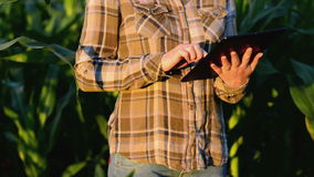 Agronomist женщины используя планшет в аграрном культивируемом кукурузном поле в заходе солнца акции видеоматериалы