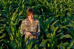 Agronomist с планшетом в кукурузном поле Стоковые Фото