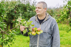 Agronomist at the apple trees in the garden Royalty Free Stock Image